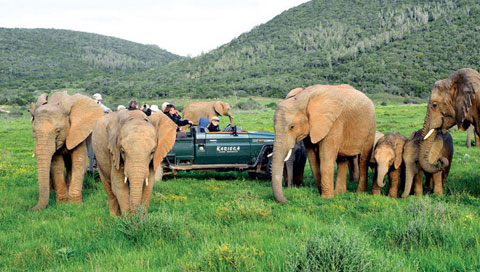 Kariega Game Reserve Elephant Herd